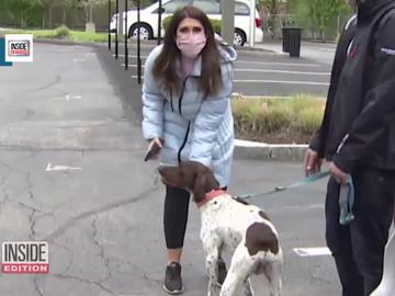 El momento en el que una reportera que anunciaba el robo de un perro detiene al ladrón al encontráselo en la calle